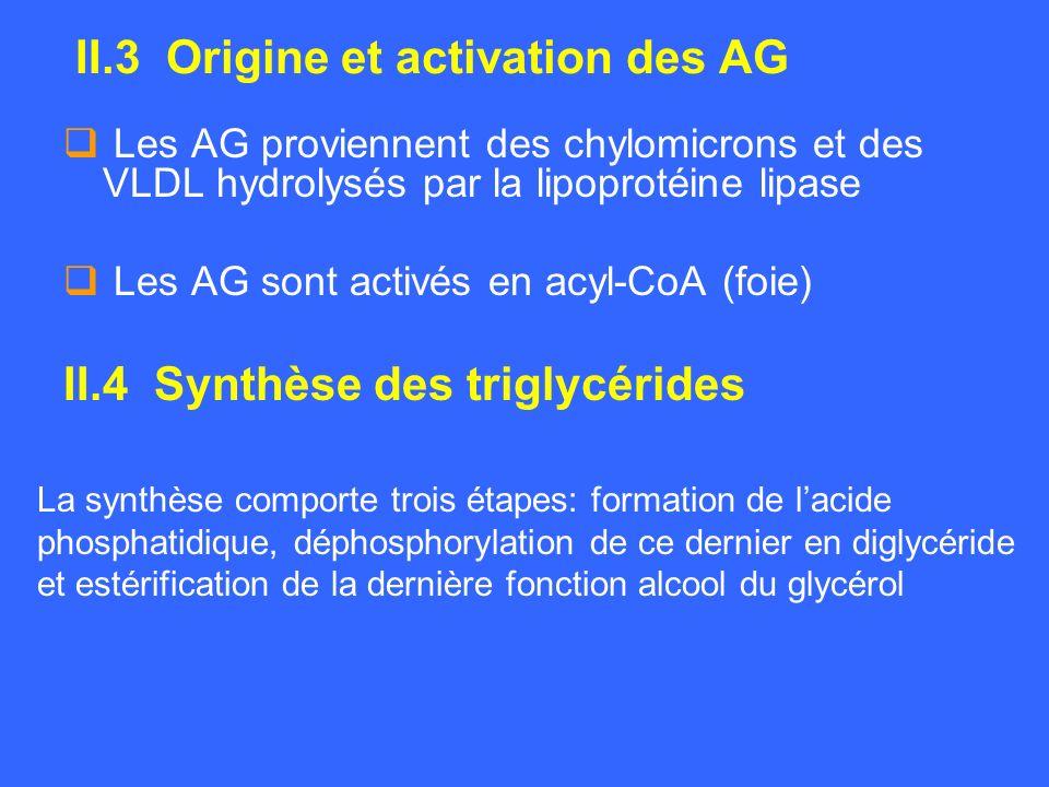II.3 Origine et activation des AG