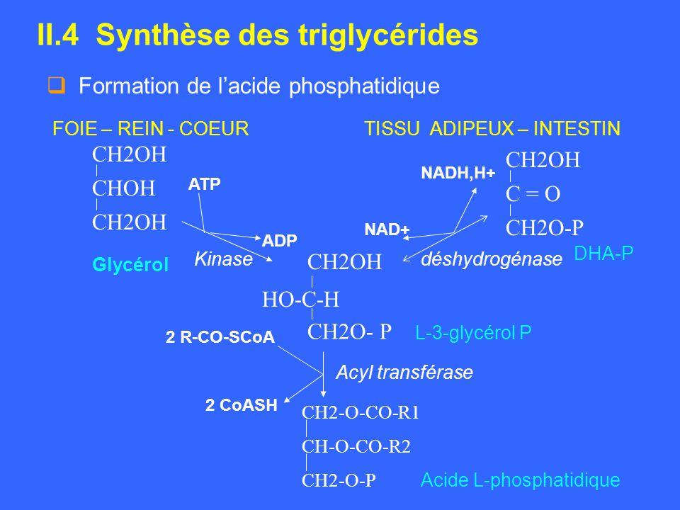 II.4 Synthèse des triglycérides