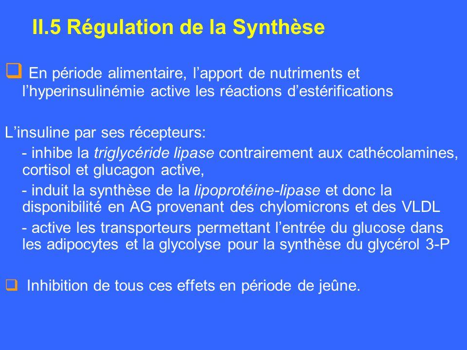 II.5 Régulation de la Synthèse