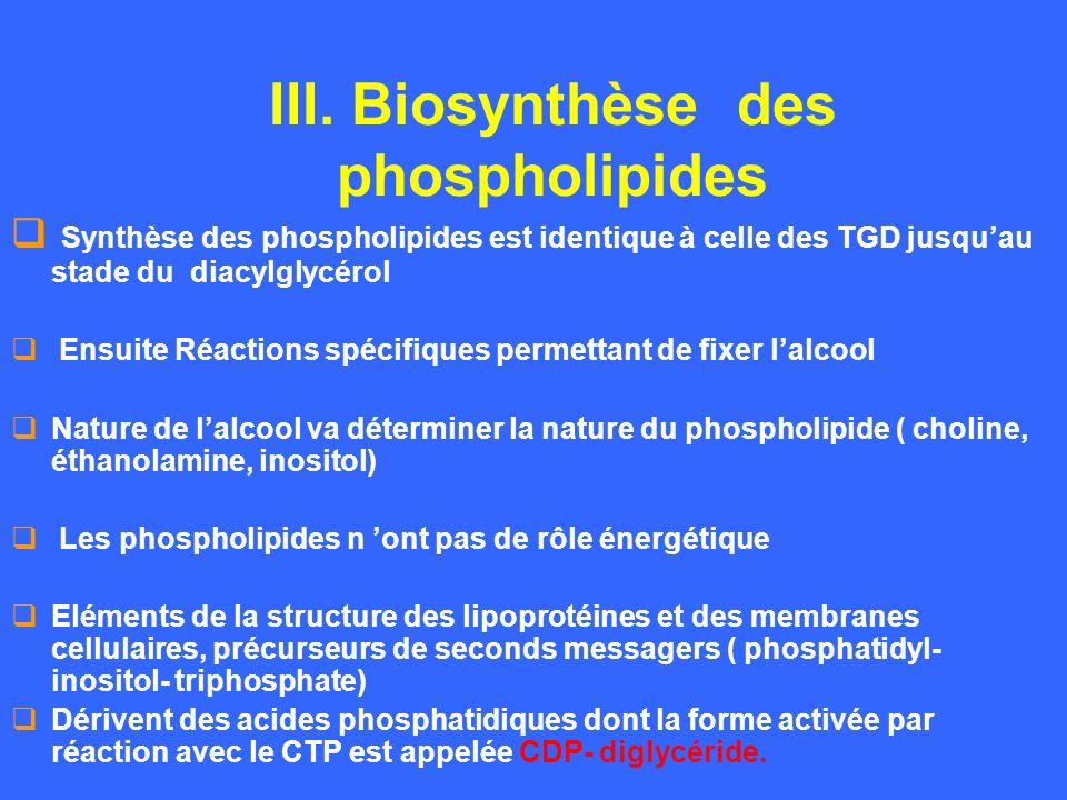 III. Biosynthèse des phospholipides