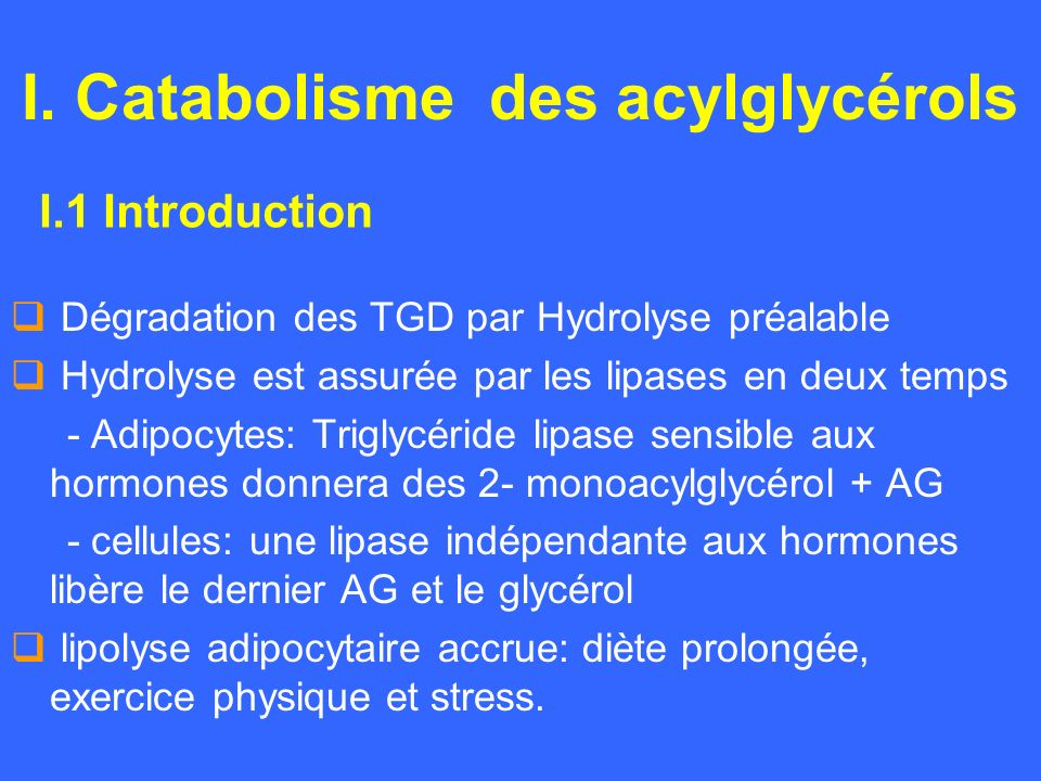 I. Catabolisme des acylglycérols