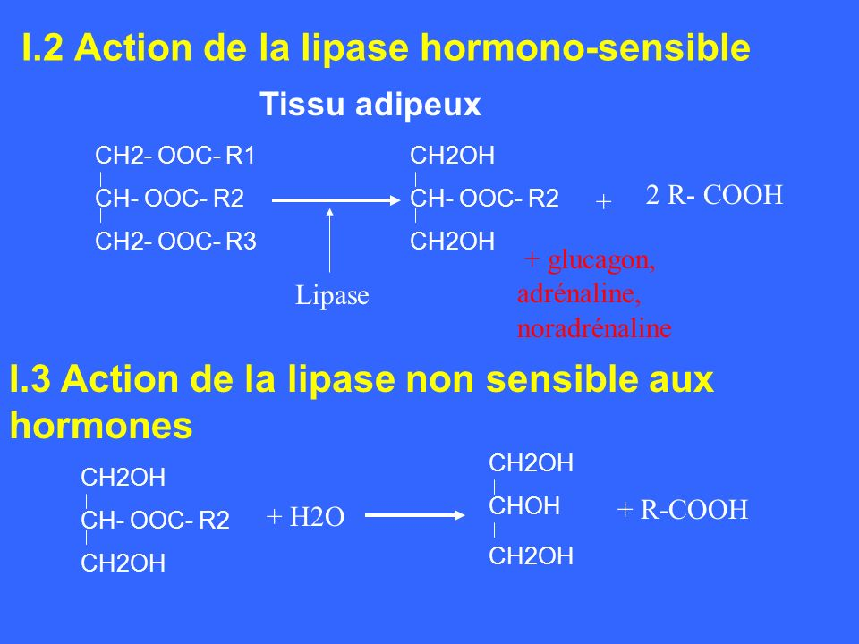 I.2 Action de la lipase hormono-sensible