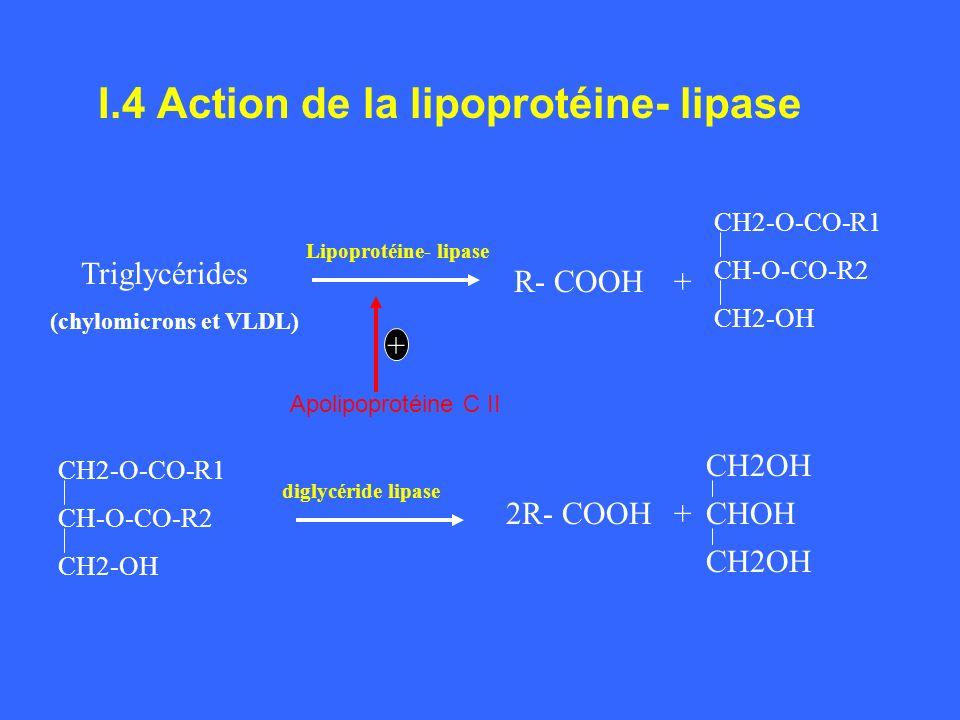 I.4 Action de la lipoprotéine- lipase