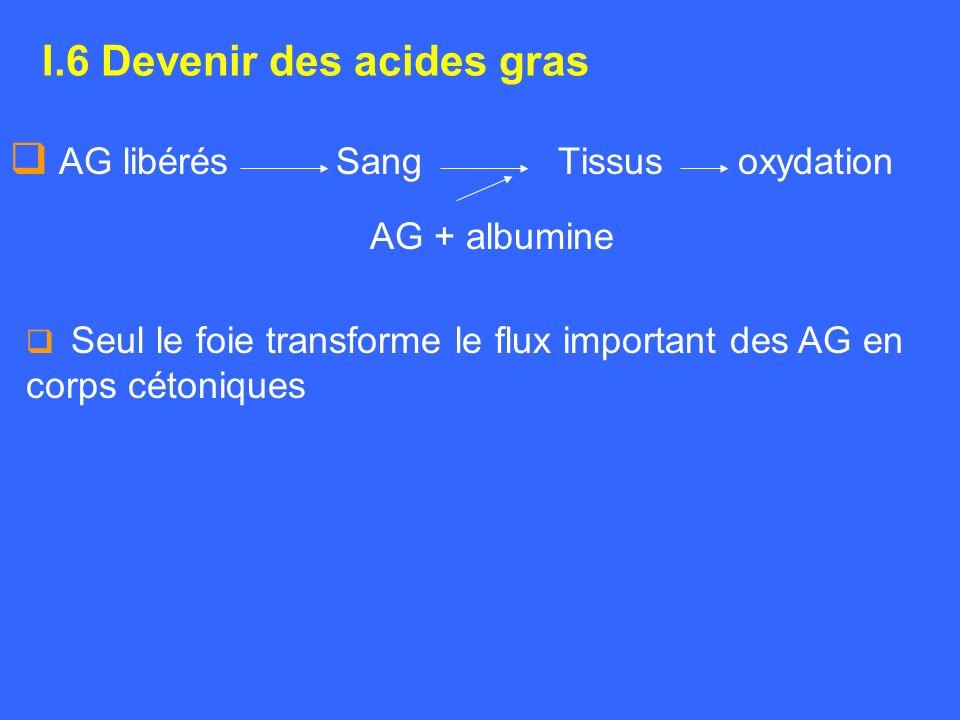 I.6 Devenir des acides gras