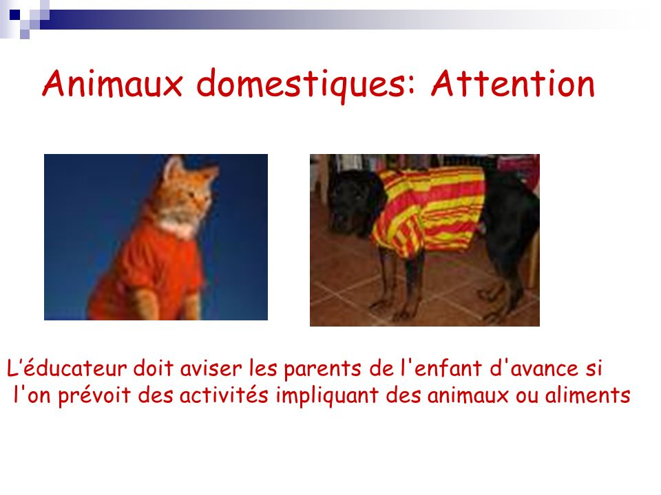 Animaux domestiques: Attention