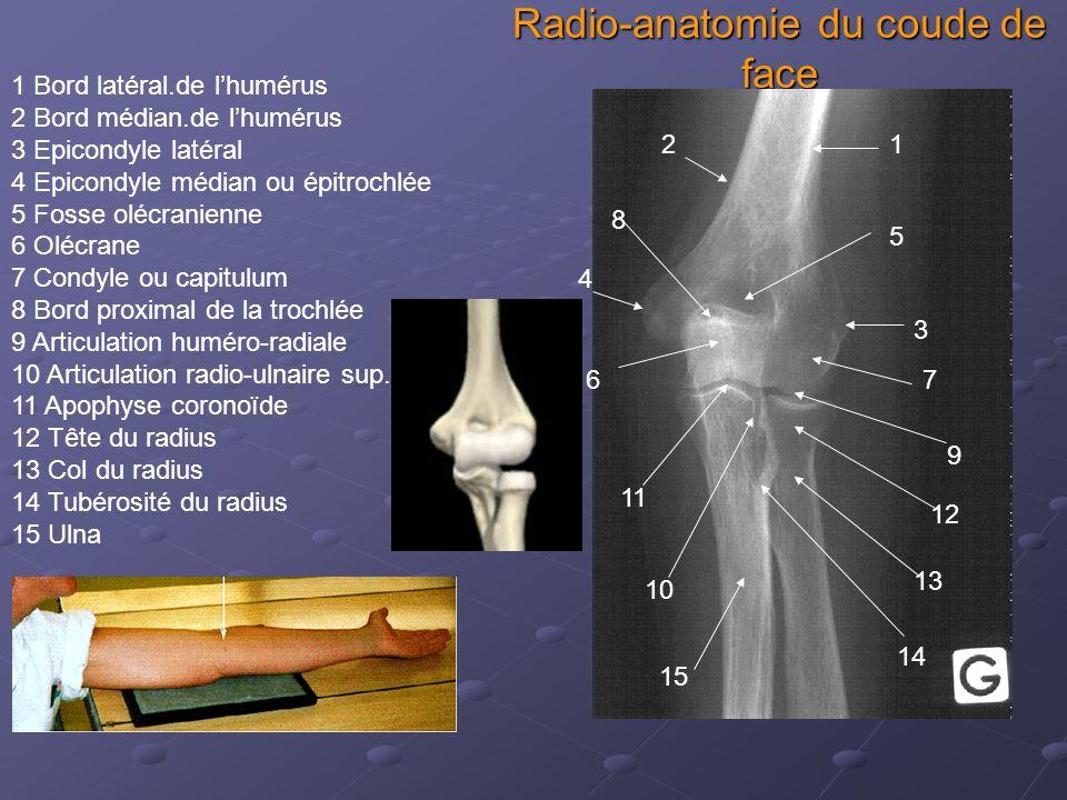 Radio-anatomie du coude de face