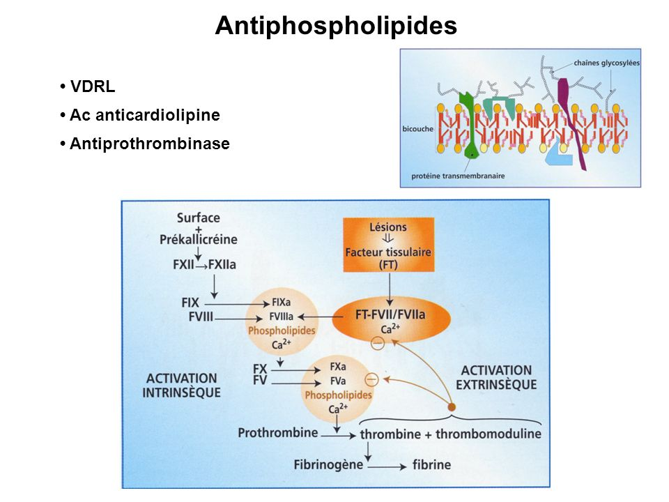 Antiphospholipides • VDRL • Ac anticardiolipine • Antiprothrombinase