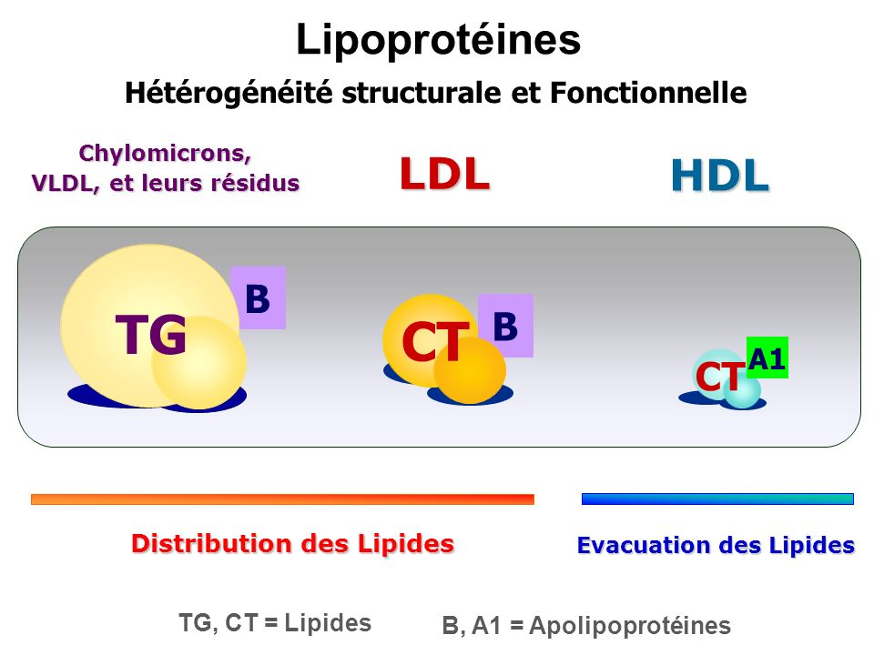 Chylomicrons, VLDL, et leurs résidus Distribution des Lipides