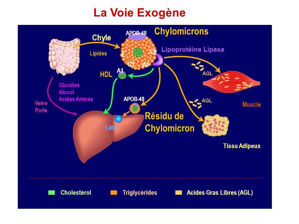 La Voie Exogène Chylomicrons Résidu de Chylomicron Chyle HDL C2