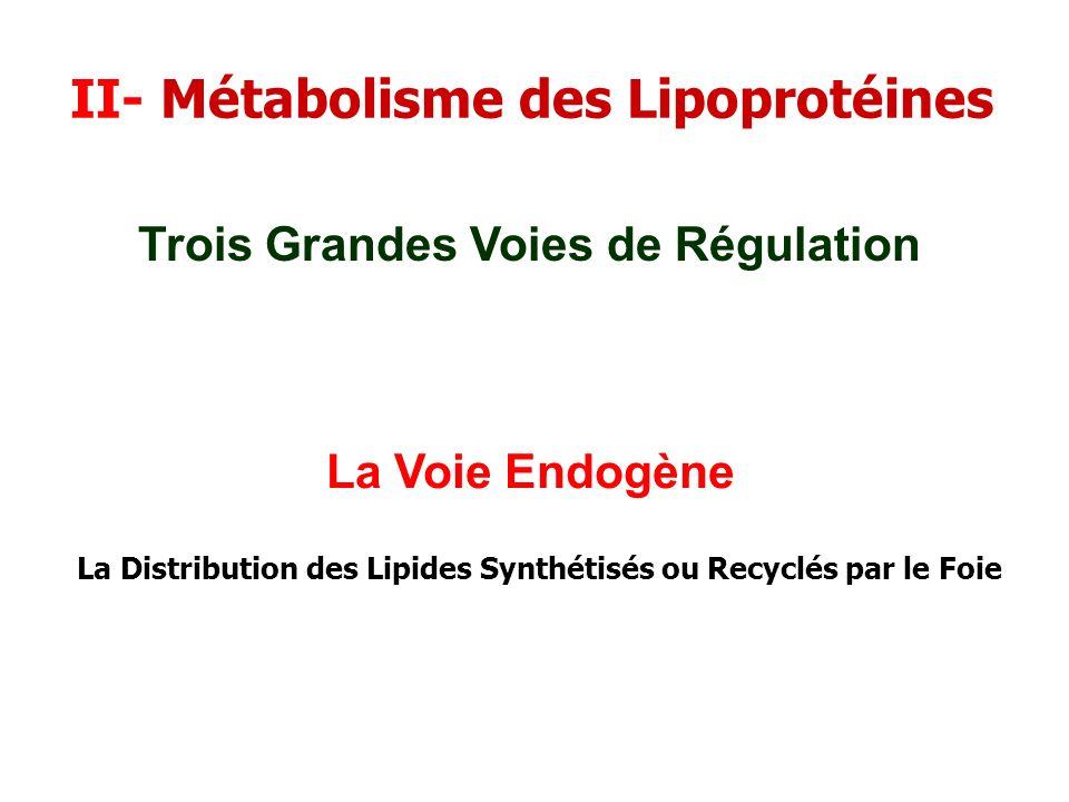 II- Métabolisme des Lipoprotéines
