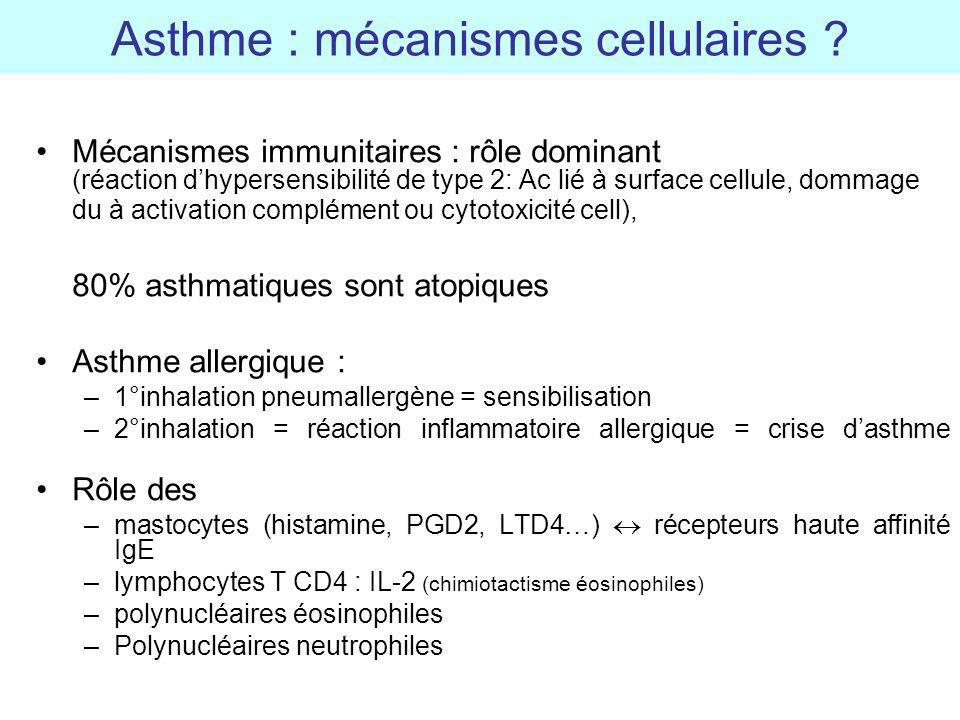 Asthme : mécanismes cellulaires