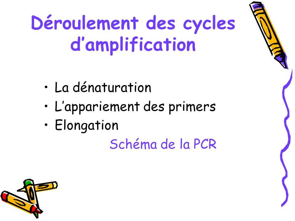 Déroulement des cycles d'amplification
