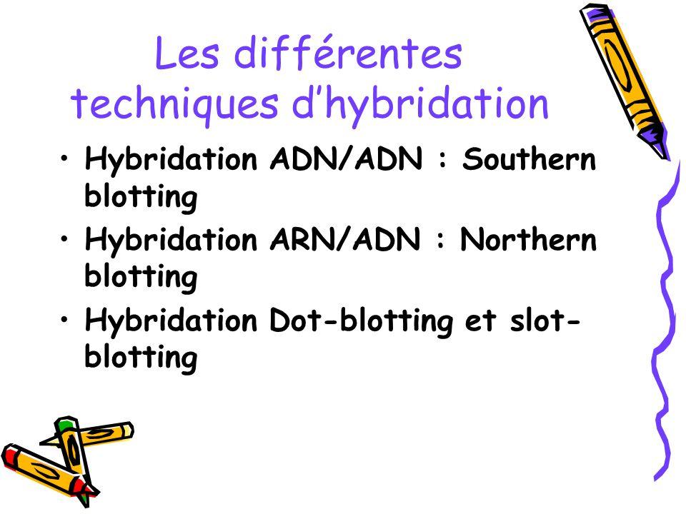 Les différentes techniques d'hybridation