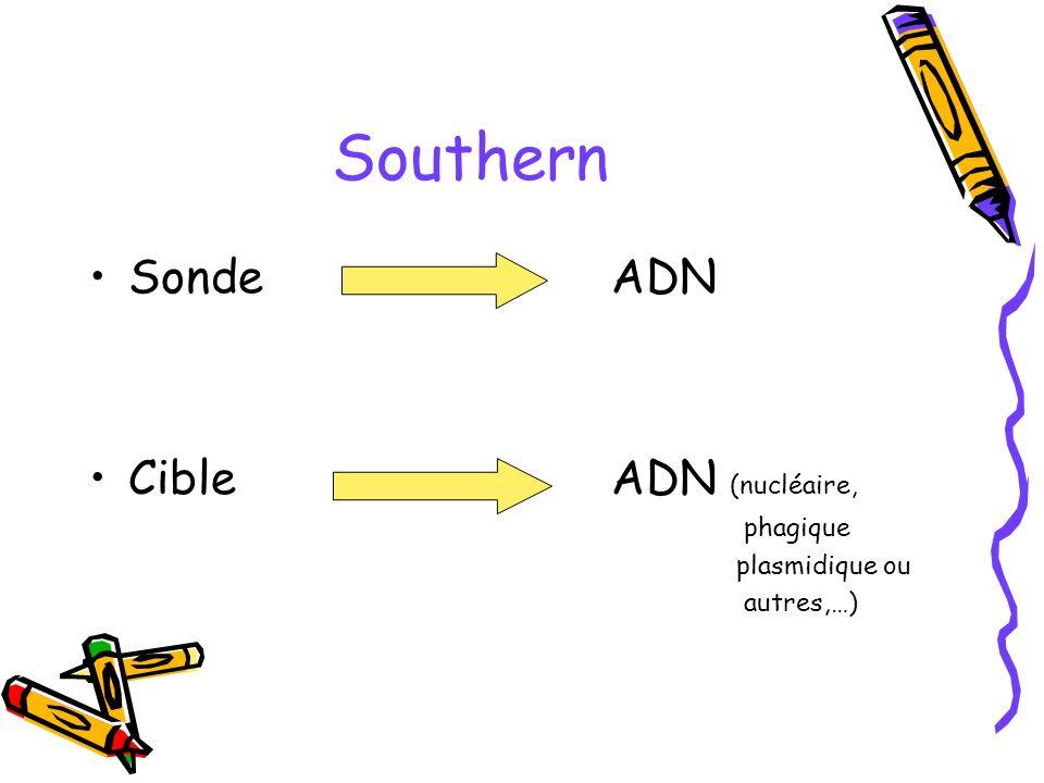 Southern Sonde ADN Cible ADN (nucléaire, phagique plasmidique ou