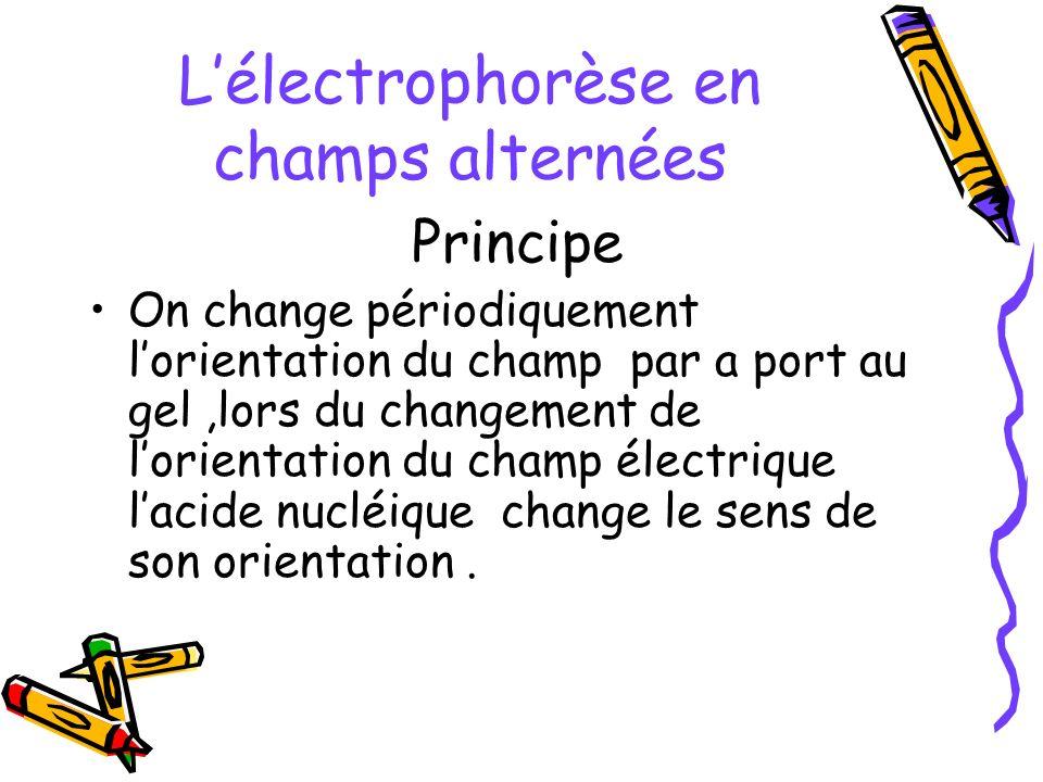 L'électrophorèse en champs alternées