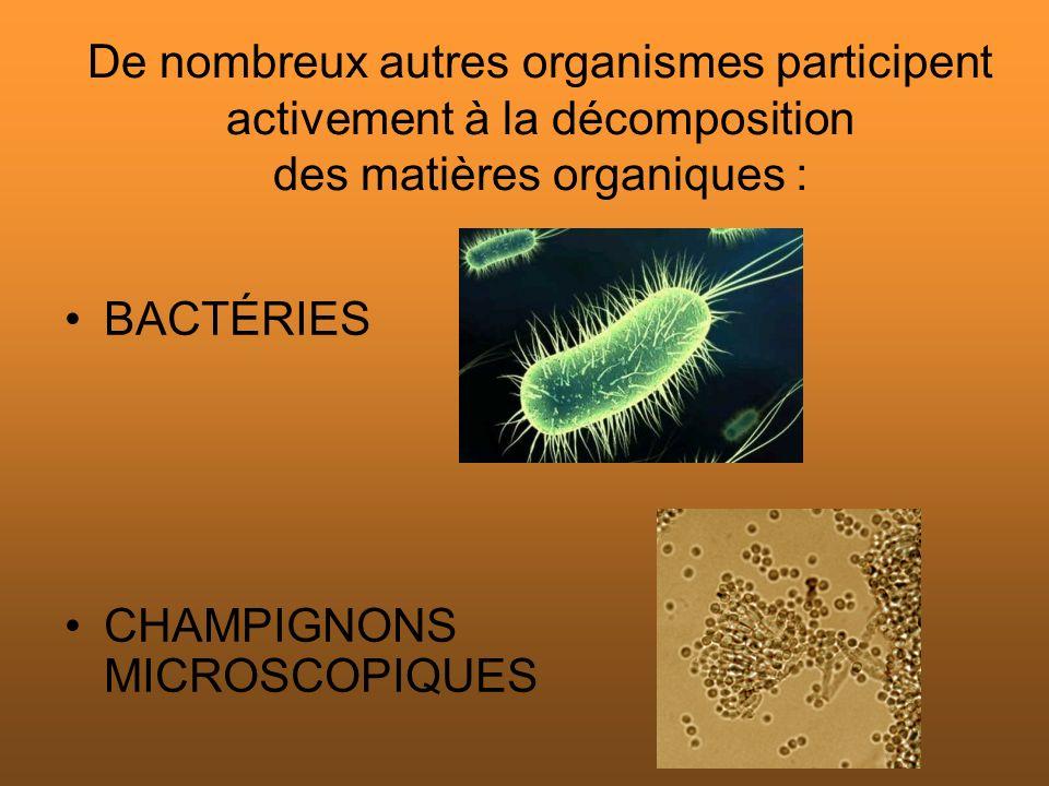 De nombreux autres organismes participent activement à la décomposition des matières organiques :