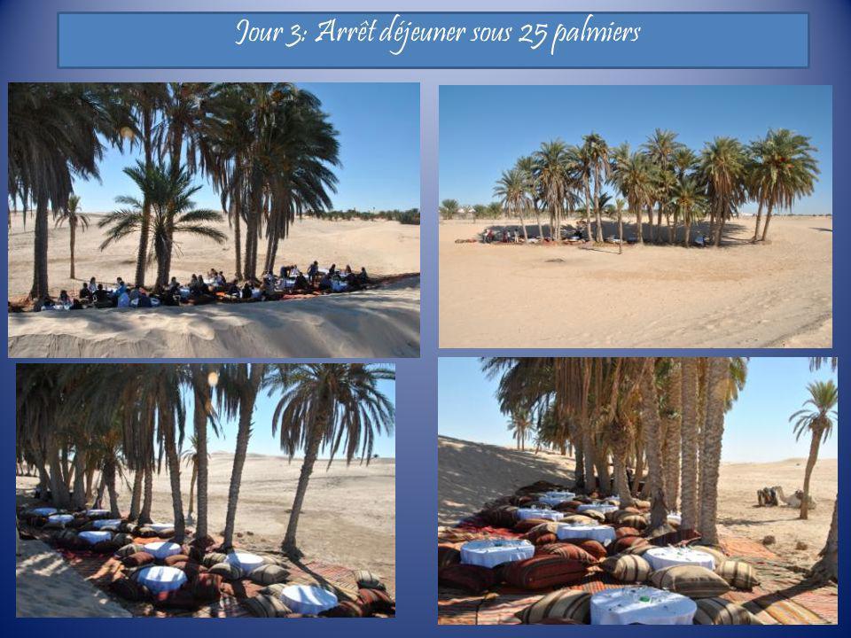 Jour 3: Arrêt déjeuner sous 25 palmiers