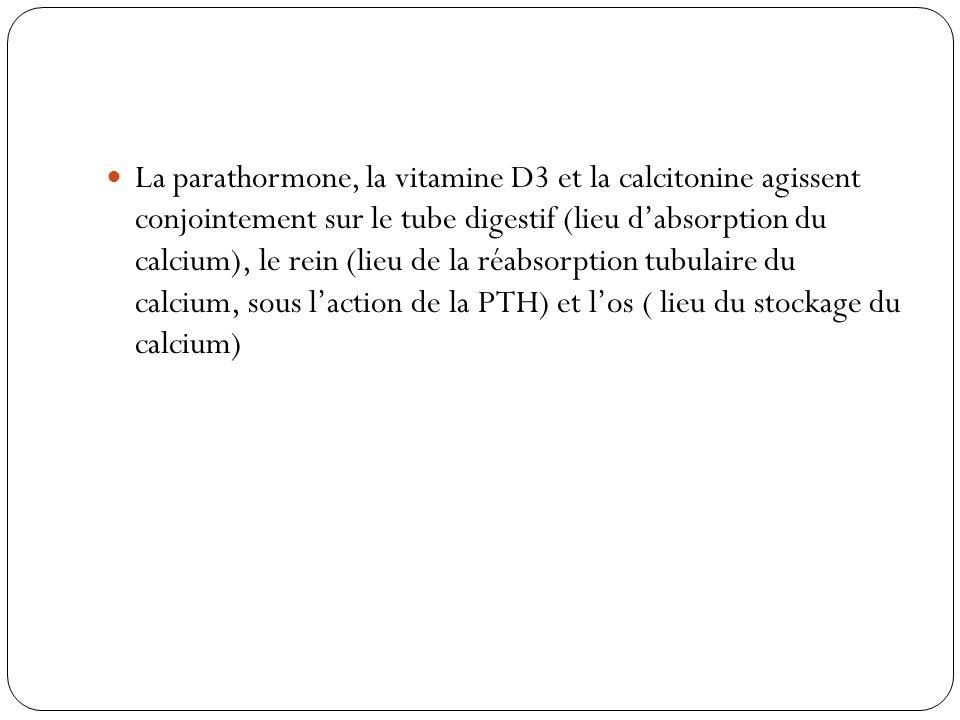 La parathormone, la vitamine D3 et la calcitonine agissent conjointement sur le tube digestif (lieu d'absorption du calcium), le rein (lieu de la réabsorption tubulaire du calcium, sous l'action de la PTH) et l'os ( lieu du stockage du calcium)