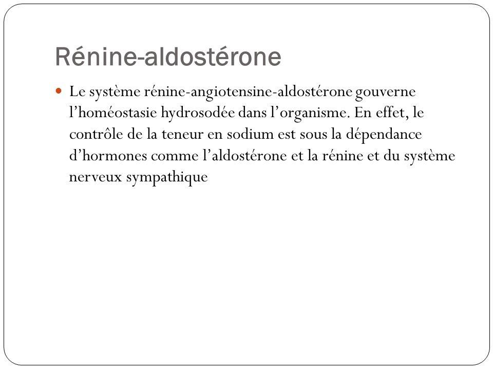 Rénine-aldostérone