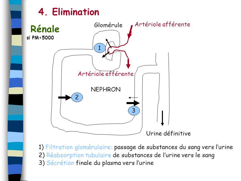 4. Elimination Rénale Glomérule Artériole afférente 1