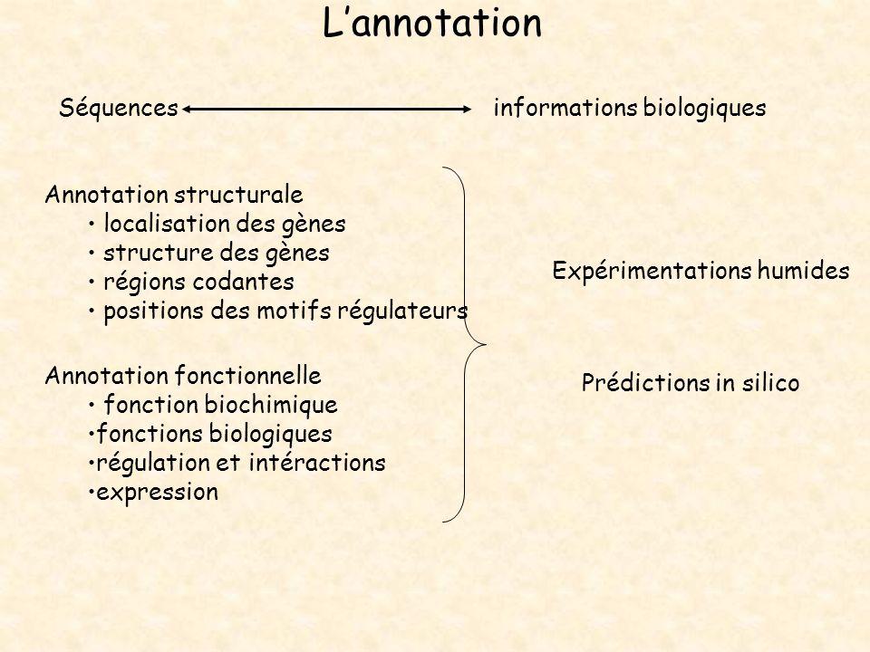L'annotation Séquences informations biologiques Annotation structurale