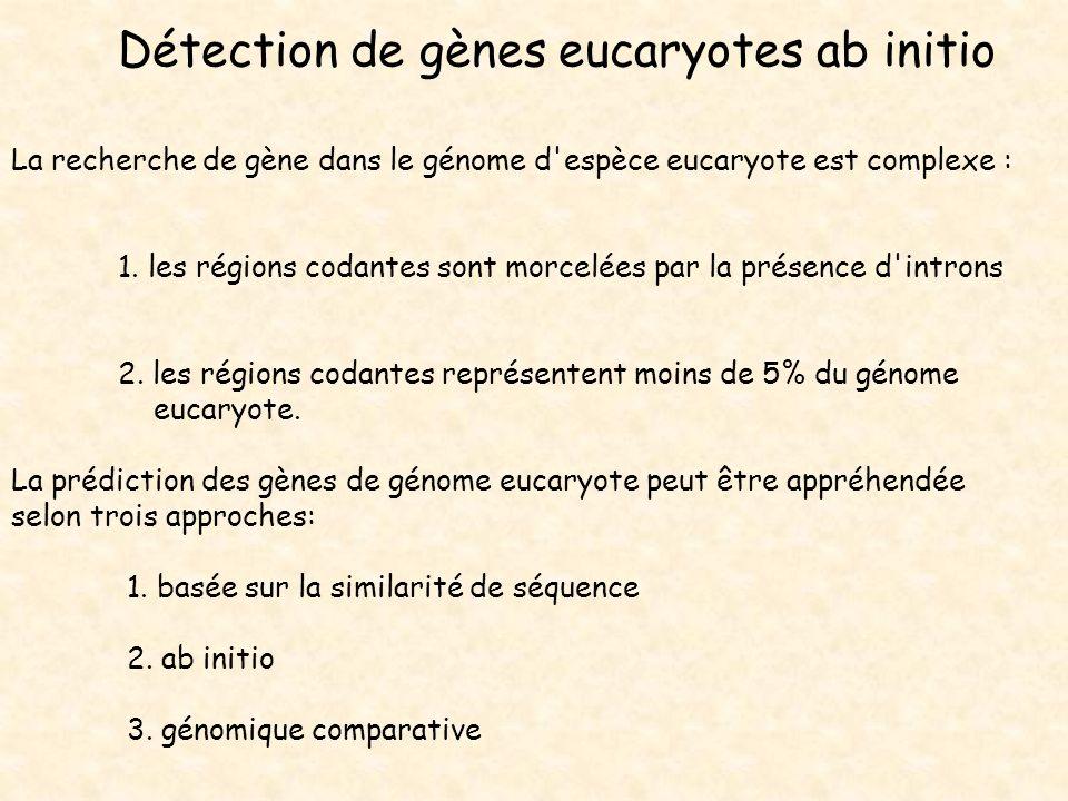 Détection de gènes eucaryotes ab initio
