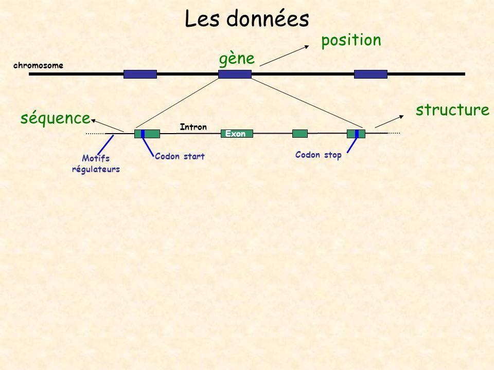 Les données position gène structure séquence chromosome Intron Exon