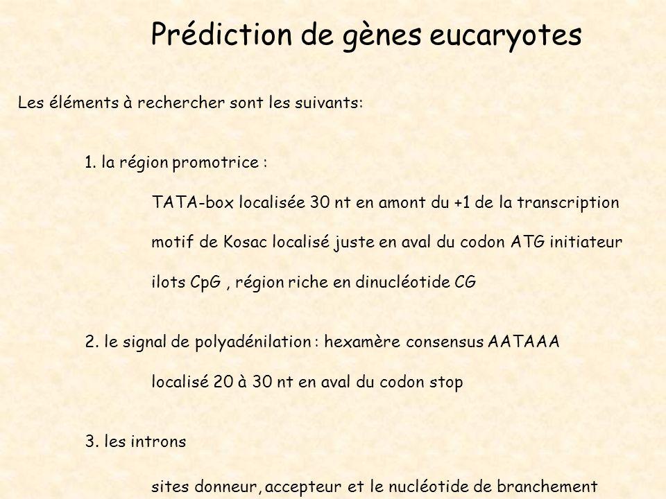 Prédiction de gènes eucaryotes