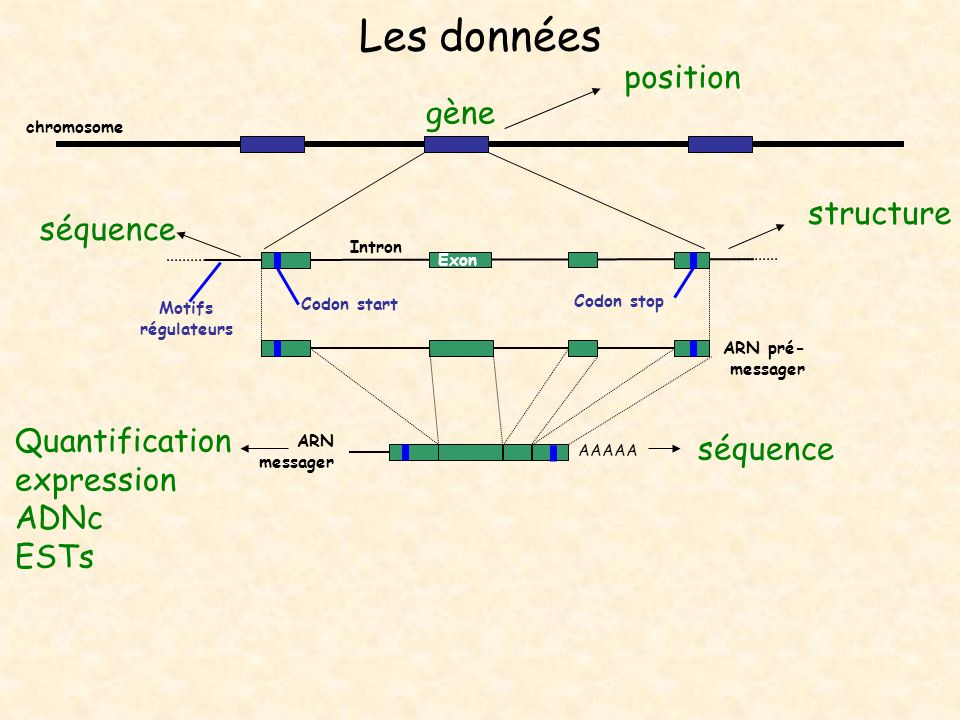Les données position gène structure séquence Quantification séquence