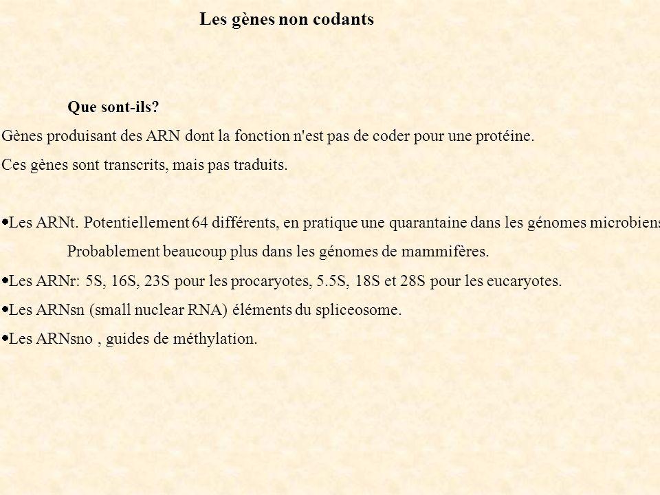 Les gènes non codants Que sont-ils Gènes produisant des ARN dont la fonction n est pas de coder pour une protéine.