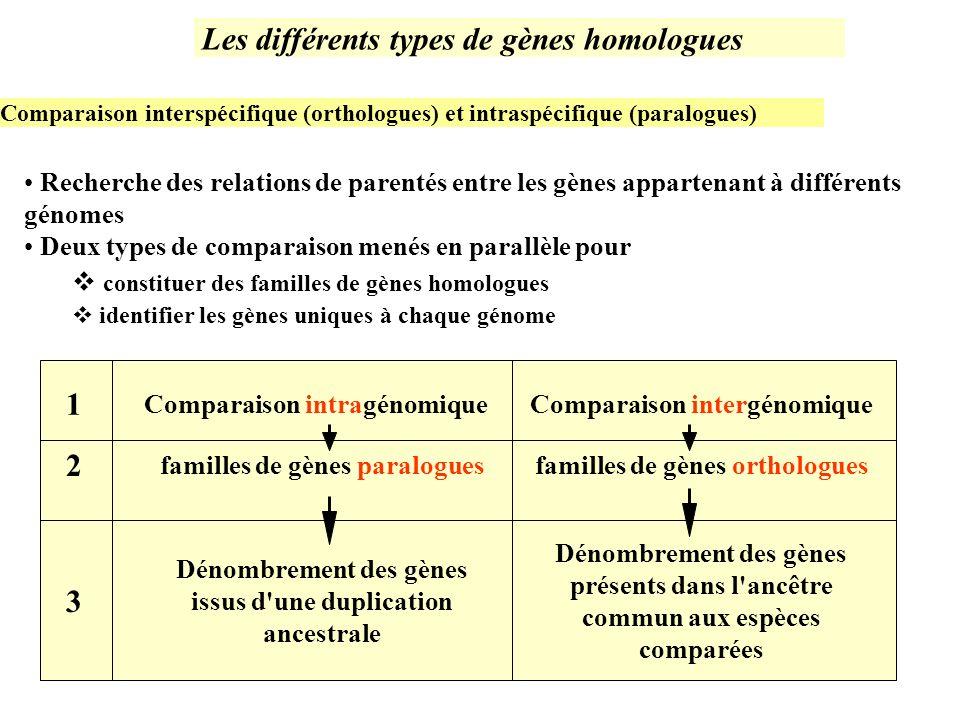 Les différents types de gènes homologues