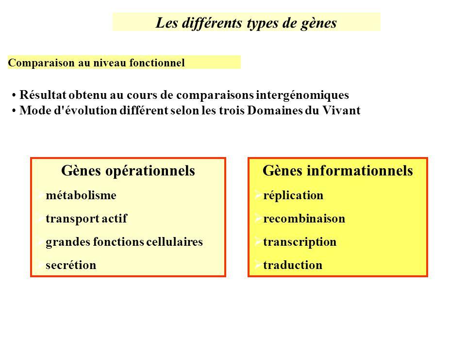Les différents types de gènes Gènes informationnels