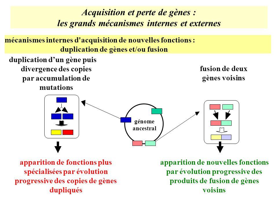 Acquisition et perte de gènes :