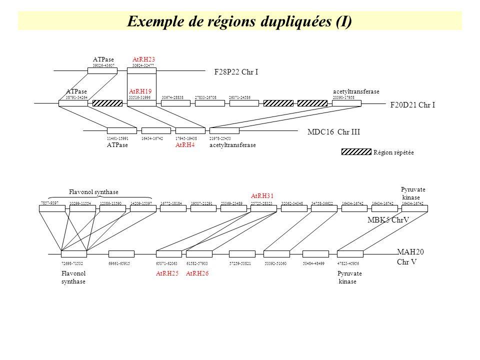 Exemple de régions dupliquées (I)