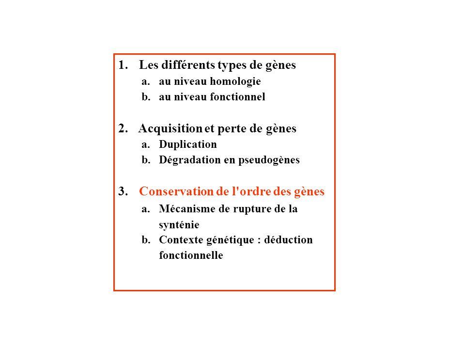 Les différents types de gènes