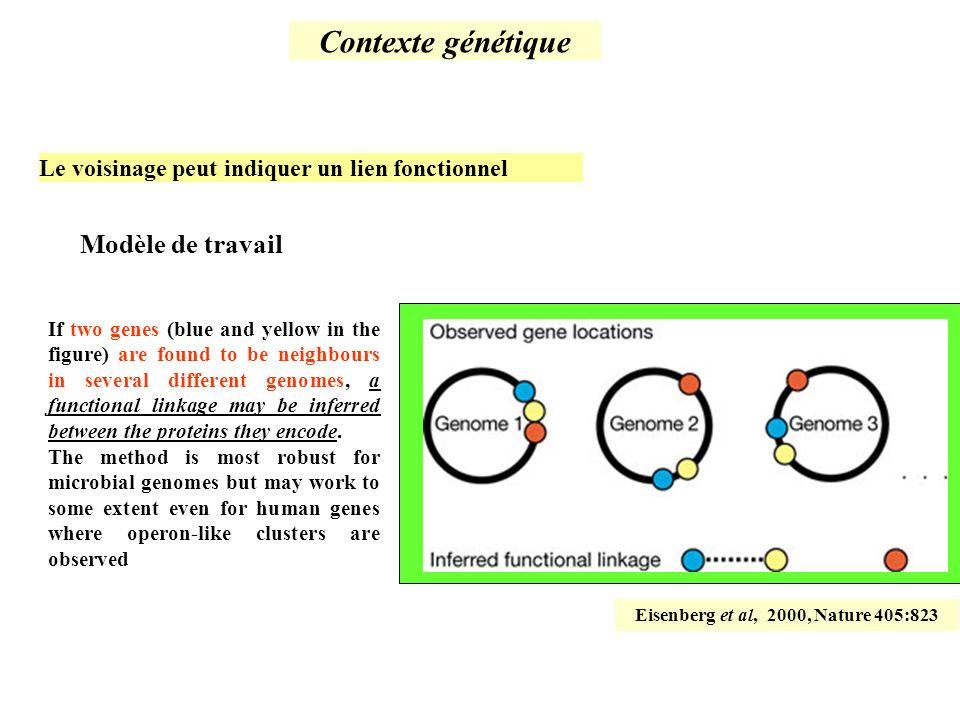 Eisenberg et al, 2000, Nature 405:823