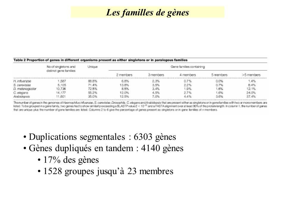 Les familles de gènes Duplications segmentales : 6303 gènes. Gènes dupliqués en tandem : 4140 gènes.