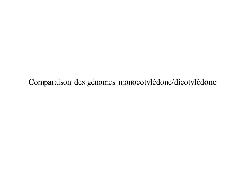 Comparaison des gènomes monocotylédone/dicotylédone