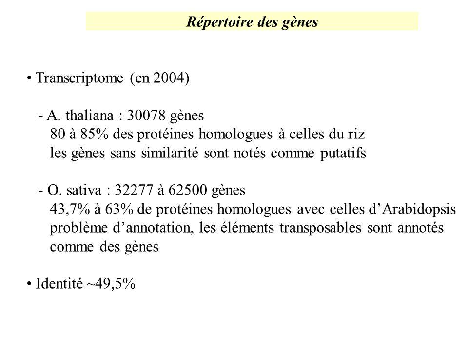 Répertoire des gènes Transcriptome (en 2004) - A. thaliana : 30078 gènes. 80 à 85% des protéines homologues à celles du riz.