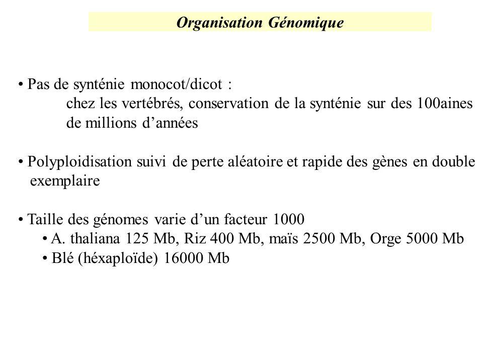 Organisation Génomique