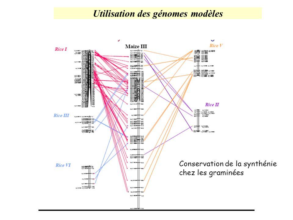 Utilisation des génomes modèles