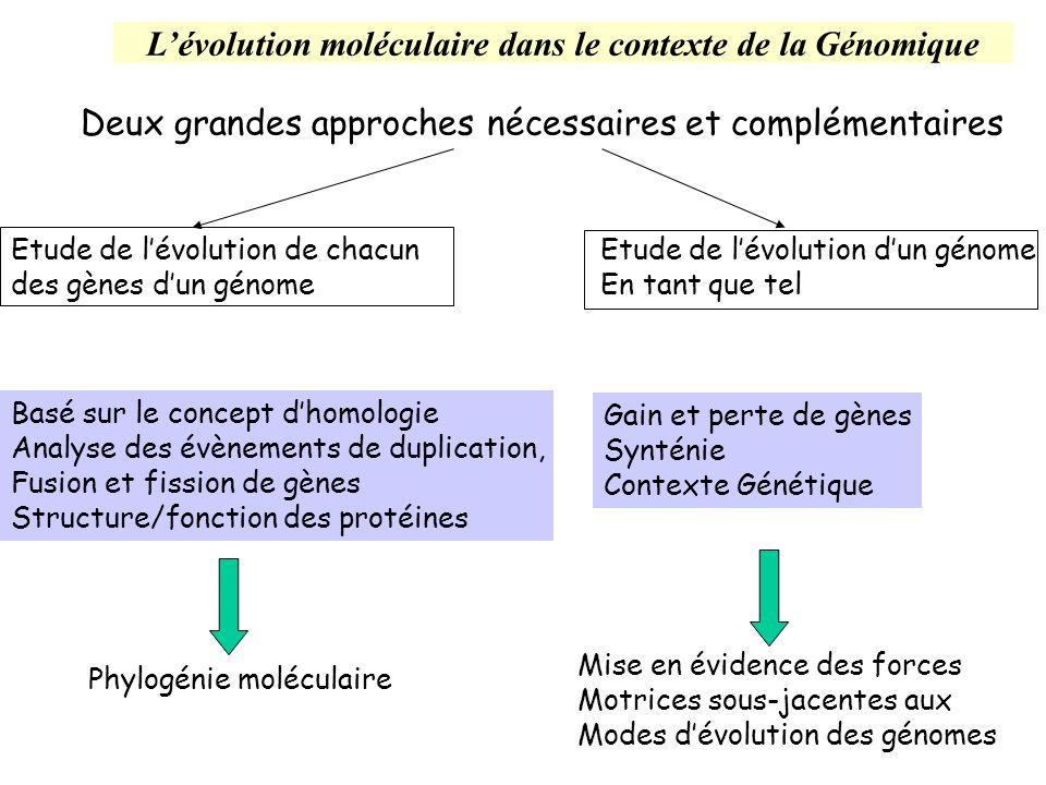 L'évolution moléculaire dans le contexte de la Génomique