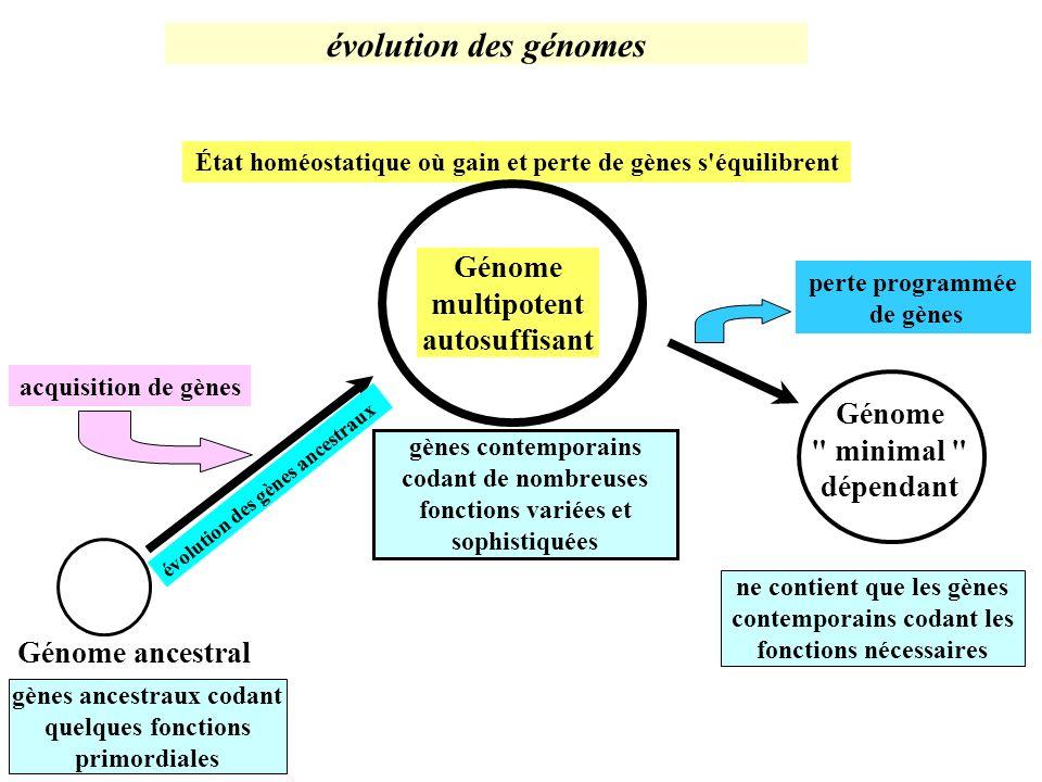 État homéostatique où gain et perte de gènes s équilibrent