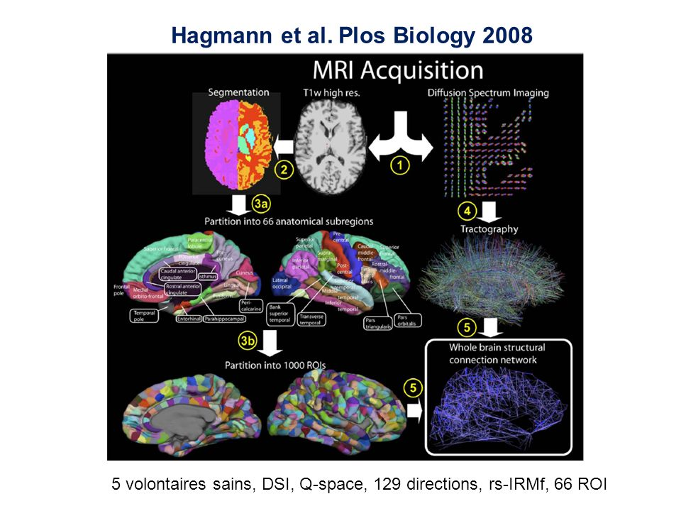 Hagmann et al. Plos Biology 2008