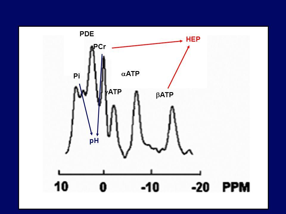 Pi PDE PCr ATP aATP bATP HEP pH