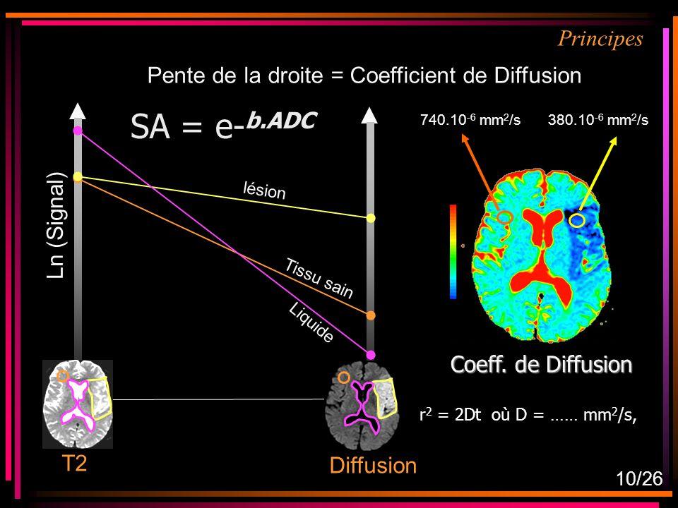 SA = e-b.ADC Principes Pente de la droite = Coefficient de Diffusion