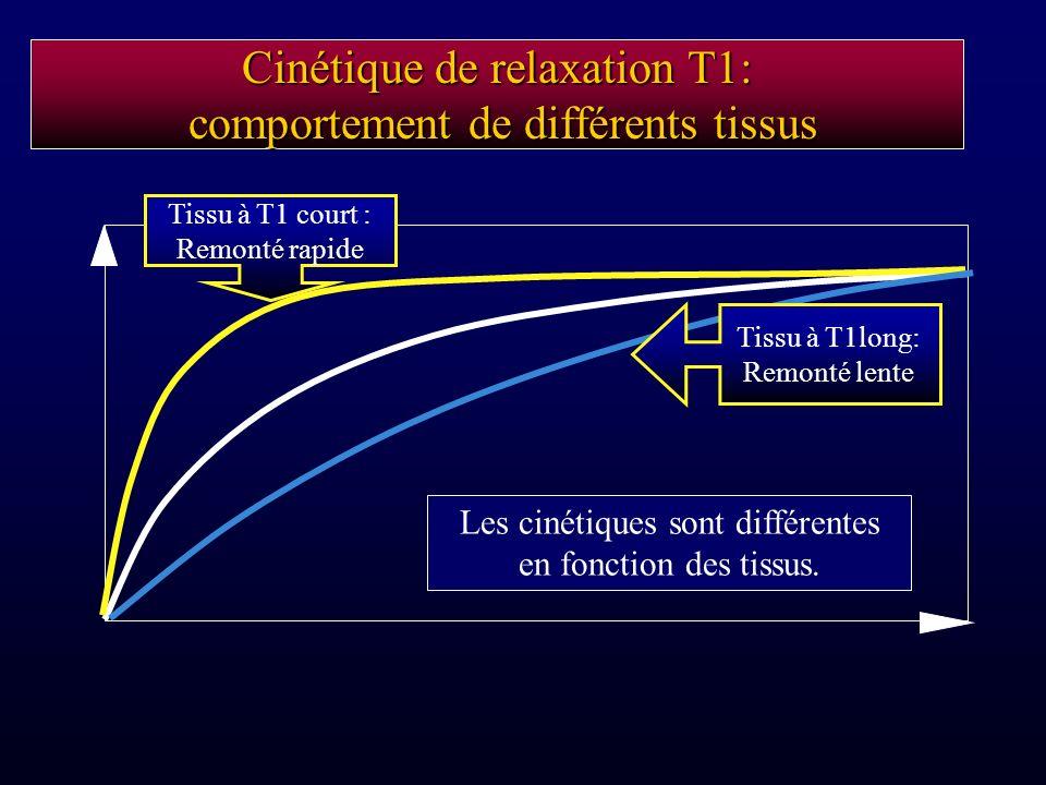 Cinétique de relaxation T1: comportement de différents tissus