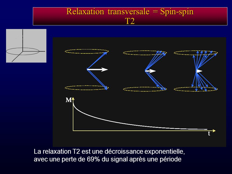 Relaxation transversale = Spin-spin T2