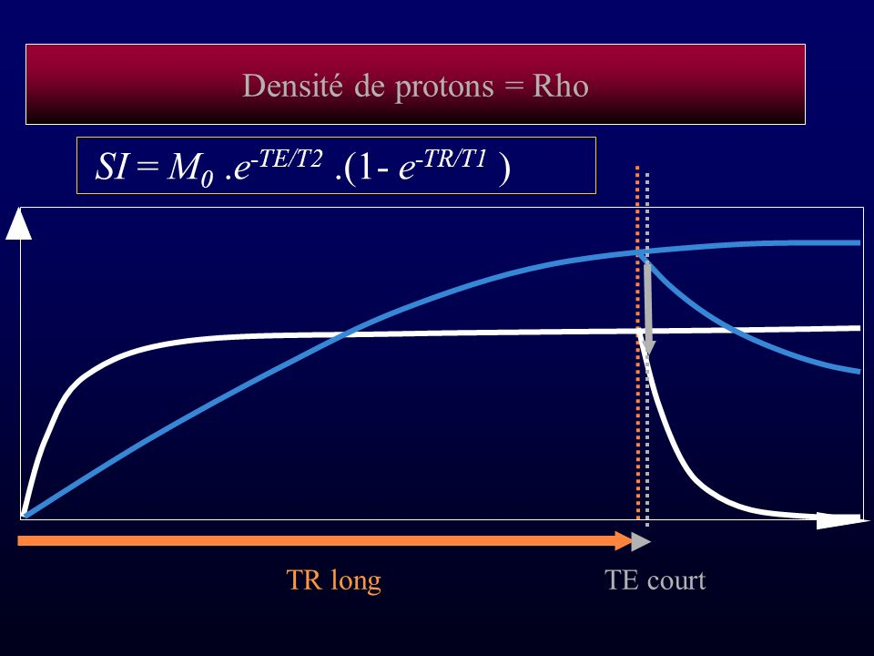 Densité de protons = Rho