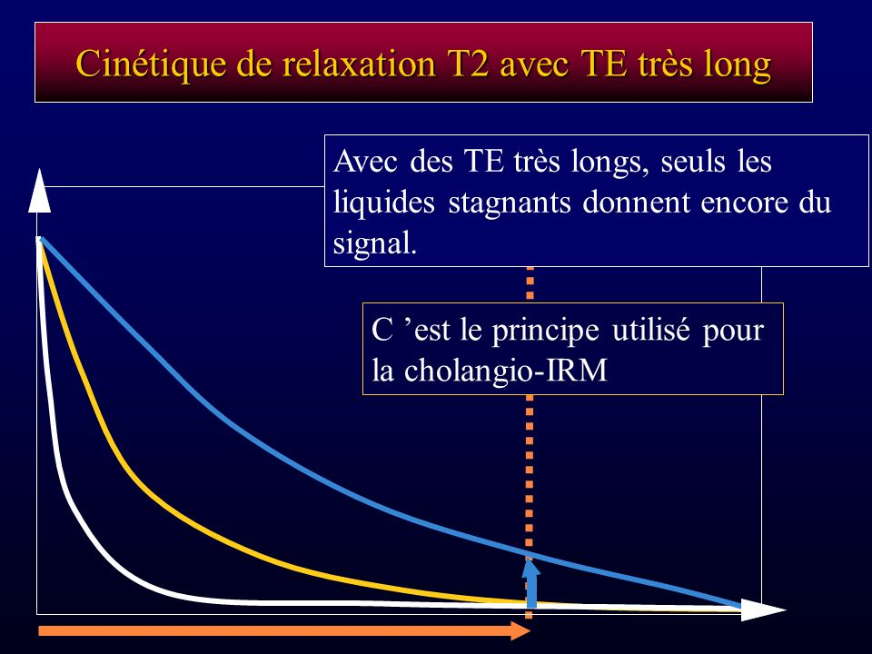 Cinétique de relaxation T2 avec TE très long